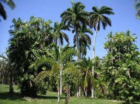 Jardín Botánico de Cienfuegos